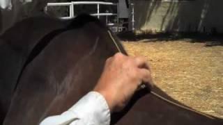 Australian Horse Saddles Correct Saddle Measurements Aussie Colin Dan