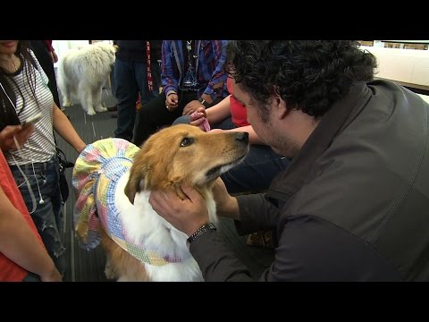 Therapy dogs invited to Dallas college to help de-stress students during finals