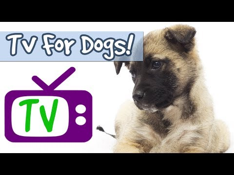 TV for Dogs Combined with Relaxing Music to Relieve Anxiety, Stop Barking, Nature Footage for Dogs🐶