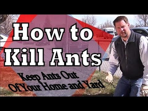 Get Rid of Ants: How to Kill Ants and Remove Ants From Your Home and Yard