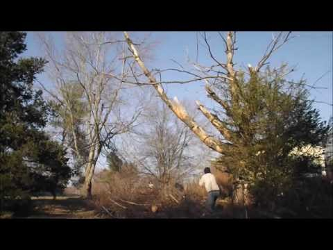 DIY  How To Cutting a big tree limb without climbing the tree using a chainsaw blade
