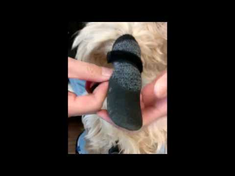 How to put on our Rubber Dipped Socks on a dog's paw