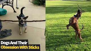 Dogs vs Sticks, Never Ending Entertainment | Funniest Dog Videos