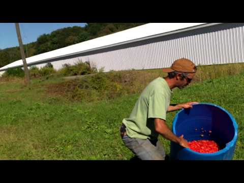 Processing Watermelon Seed