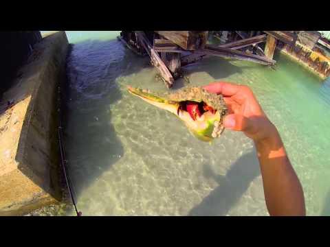 Sea-Doo GTI 155 Jetski fishing in Florida for Sheepshead