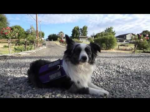 SERVICE DOG TRAINING San Francisco