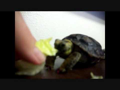 Baby Squirt Enjoying Her Lettuce