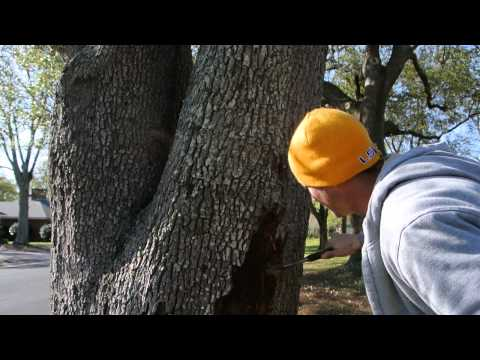 Disease and Pest Treatment For Live Oak, Gulfport, MS