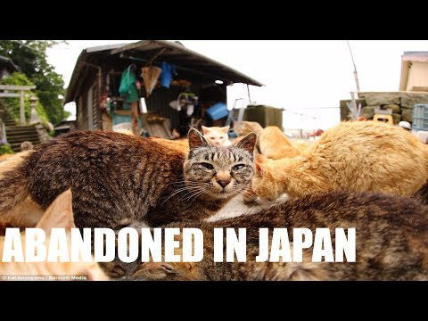 ABANDONED CAT ISLAND FOUND IN JAPAN - CATS EVERYWHERE!!