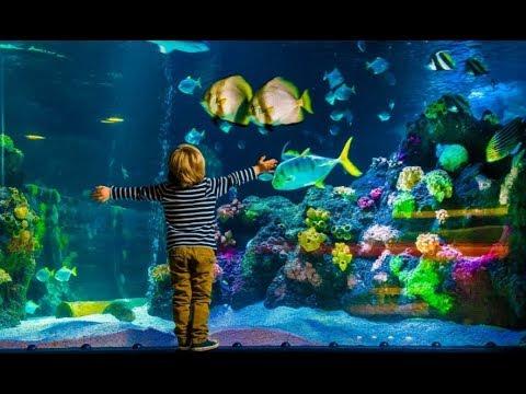 Exploring National Sea Life Centre, Birmingham
