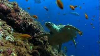 #x202b;سلحفاة تسبح تحت الماء .. رائعة ..#x202c;lrm;
