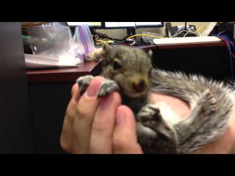 Cutest Baby Squirrel – Getting to pet it!