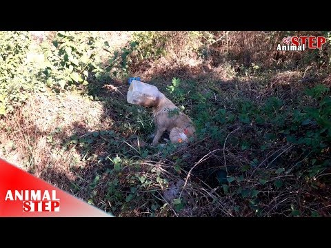 Stray Dog with Head Stuck in Plastic Container Getting Rescued and Finally Found New Home