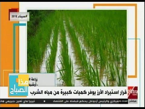 Xxx Mp4 هذا الصباح قرار استيراد الأرز يوفر كميات كبيرة من مياه الشرب التفاصيل 3gp Sex