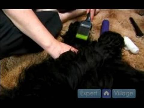 Dog First Aid : How to Care for a Dog's Torn Toe Nail