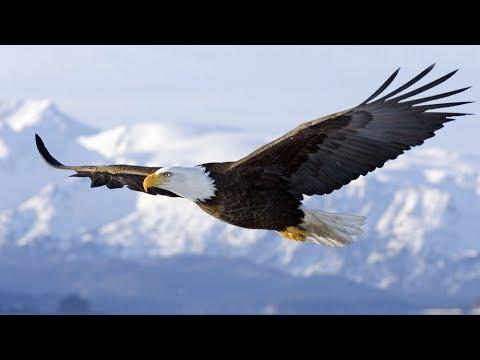Spirit Animal ~ Eagle ~Native American Music -Niall
