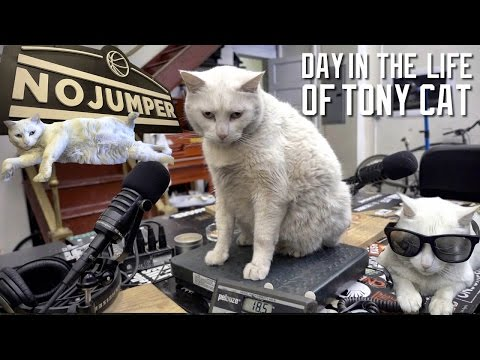 A DAY IN THE LIFE OF TONY CAT (A 19LB MONSTER!)