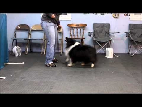 Quick 15 Second Training To Get Your Dog To Stop Barking