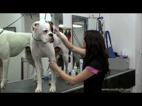 Grooming Tips for Short Haired Dogs