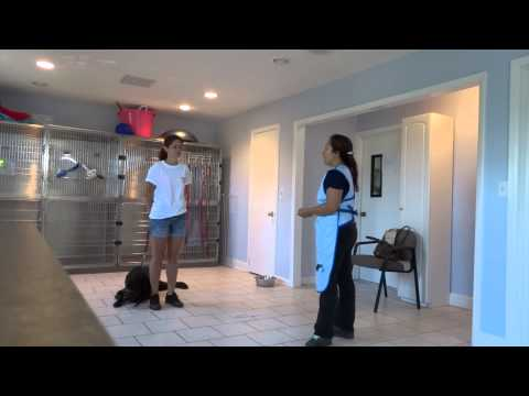 How to Train an Aggressive Dog with Level 4 Bite Behavior Modification