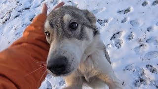Download Cold and Hungry This Friendly Dog Was Waiting For Someone To Save Her Video
