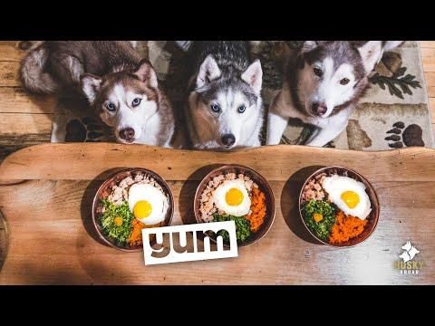Home Made Dog Food Recipe Turkey and Eggs | Husky Squad