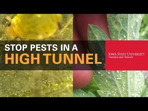 How to Protect Your Plants from Pests in a High Tunnel
