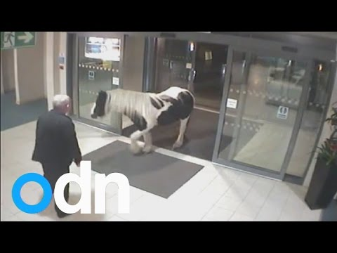 MUST SEE: Horse walks into Cheshire police headquarters
