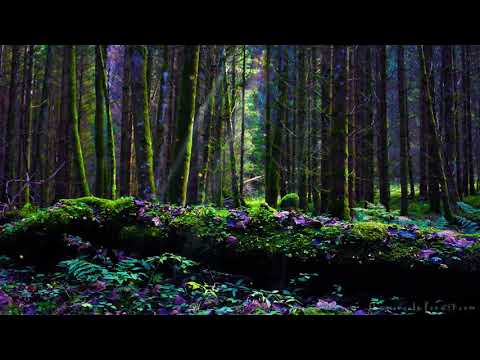 🎧 After Winter: Enchanted Spring Forest ASMR Ambience   8 HOURS
