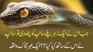 جب اس نے ایک زہریلے سانپ کو پناہ دی تو سانپ نے اس کے ساتھ کیا کیا؟ ایک عبرتناک واقعہ
