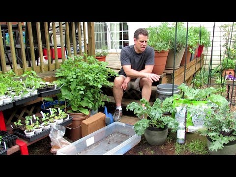 Container Gardening: All About Worm Castings, A Soilless Mix,  Refreshing Old Mix, Moisture Control