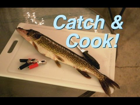 DOPE Pickerel Catch And Cook in New Hampshire