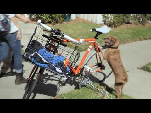 Iams Dog Food Commercial: Keep Love Strong - Bike Guard (short version)