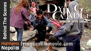 New Nepali Movie DYING CANDLE Behind The Scenes 2017/2073 | Working With Animals