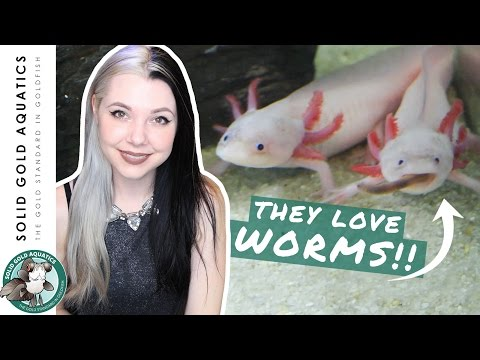 How Are My Axolotls Doing?! - UPDATE