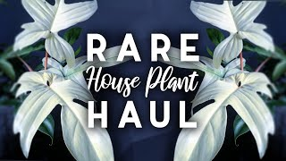 Rare Plant Haul! | 7 New Rare Houseplants! | 2019