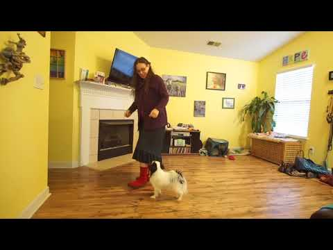 Hestia's heel training 011518