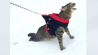 CATS, DOGS and other FUNNY ANIMALS for even better HOLIDAYS!
