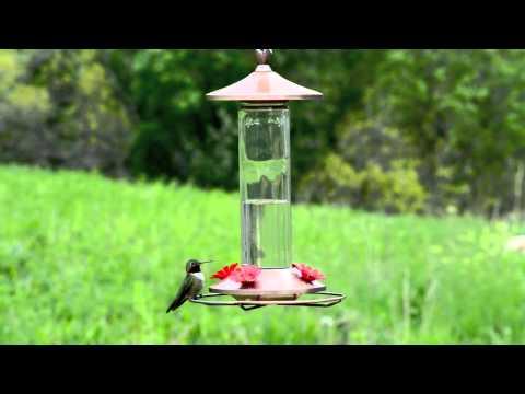 Perky-Pet® Elegant Copper Glass Hummingbird Feeder