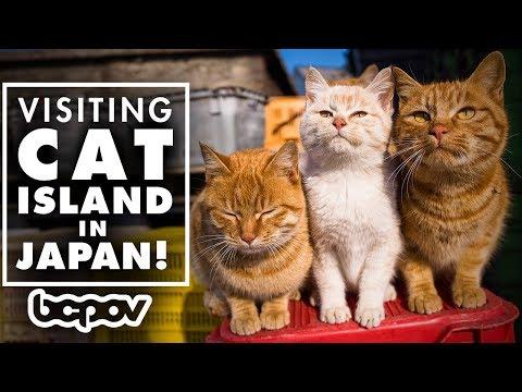 AN ISLAND FULL OF CATS!?   Visiting Cat Island In Japan! - Tashirojima