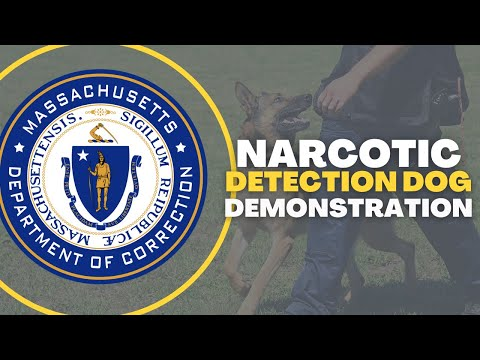 Narcotic Detection Dog Demonstration