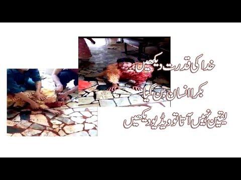 Eid Par Bakra Insan Ban Gya, Insan ki Qurbani, Qurbani Video, Qurbani Ka Insan