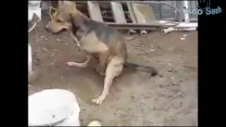 Whatsapp funny video compilation 2016