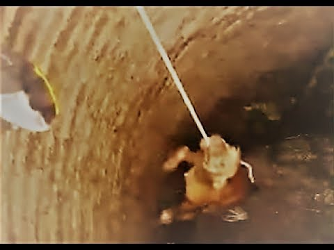 Pitbull falls into a well see what happens next!!!