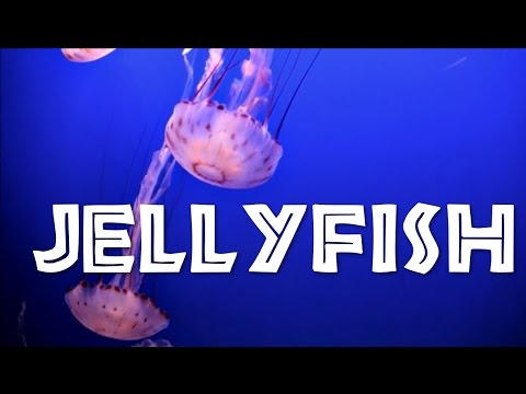 All About Jellyfish for Kids: Jellyfish for Children - FreeSchool