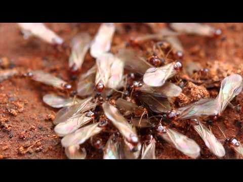 Termites: Signs and prevention tips