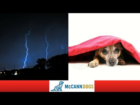 How To Calm A Dog That's Afraid of Thunder
