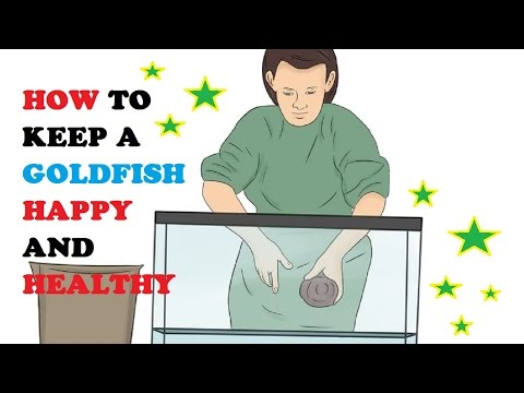 How to Keep a Goldfish Happy and Healthy
