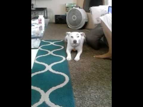 My dog named snoopy