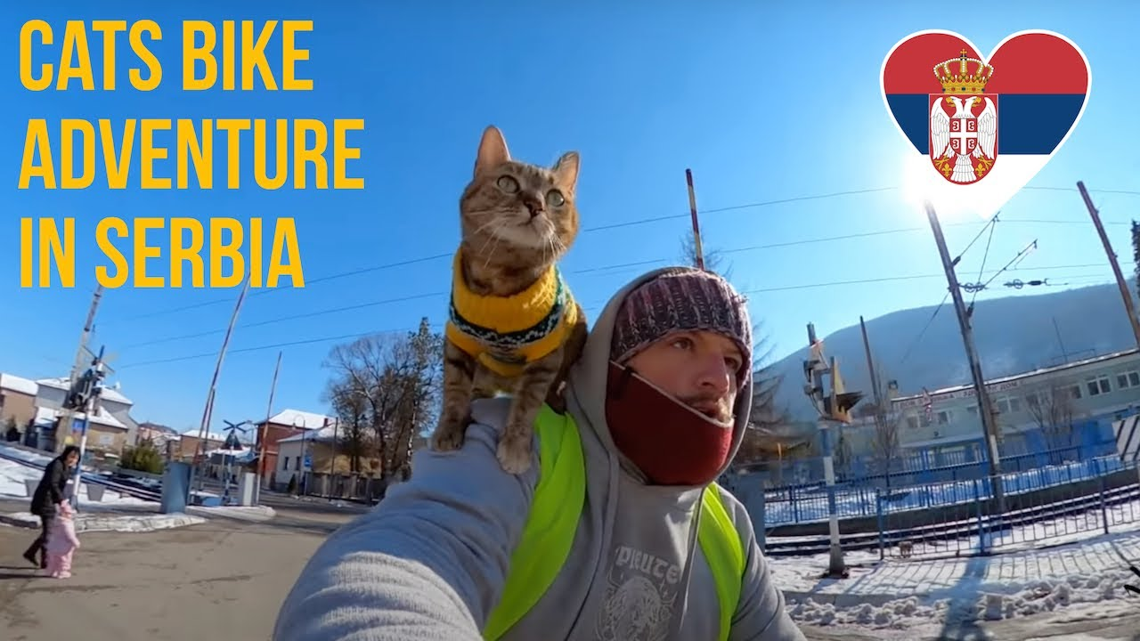 Cats bike ride to Serbia 🚴🏼♂️😻❤️
